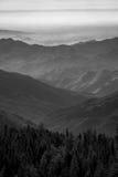 Zwart-wit mening van Sequoia Nationaal Park Stock Afbeelding