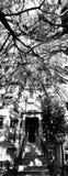 Zwart & Wit Panorama van een Huis in Savanne - Georgië - de V.S. royalty-vrije stock afbeelding