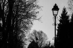 Zwart-wit parklandschap met lange lantaarnpalen stock foto