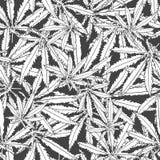 Zwart-wit patroonmarihuana Stock Afbeelding