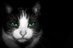 Zwart-wit Portret van een kat met groene ogen royalty-vrije stock afbeelding
