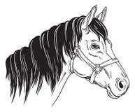 Zwart-wit portret van een paard stock illustratie