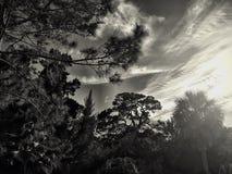 Zwart-wit schot van bomen en hemel Stock Afbeelding