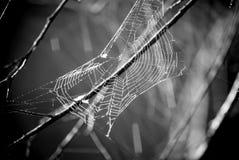 Zwart-wit spinneweb Stock Afbeeldingen