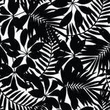 Zwart-wit tropisch bladeren naadloos patroon Stock Foto's