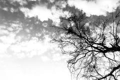 Zwart-wit van Donkere bovenkant van de tak van de dode boom Stock Foto