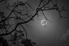 Zwart-wit van romantisch landschap bij nacht royalty-vrije stock foto