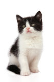 Zwart-wit weinig katje Stock Afbeeldingen