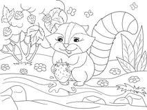 Zwart-witte Aard van het beeldverhaal de kleurende boek De Amerikaanse, noordelijke wasbeer en aardbeien van wasbeerwassen Royalty-vrije Stock Foto's