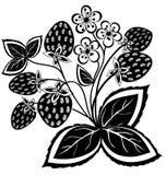 Zwart-witte abstracte aardbei, bloem, verlof Royalty-vrije Stock Fotografie