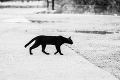 Zwart-witte beelden van zwarte katten die door de weg aan de overkant lopen die een gevoel van eenzaamheid, eenzaamheid geven royalty-vrije stock afbeeldingen