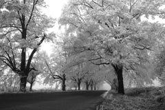 Zwart-witte bevroren weg Royalty-vrije Stock Fotografie