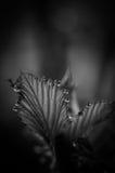 Zwart-witte bladeren Royalty-vrije Stock Afbeeldingen