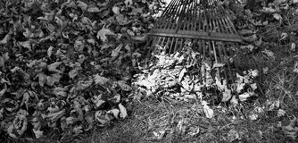 Zwart-witte bladeren en hark Royalty-vrije Stock Afbeelding