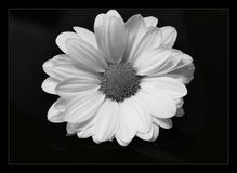 Zwart-witte bloem Royalty-vrije Stock Fotografie
