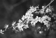 Zwart-witte bloemdetails Royalty-vrije Stock Foto