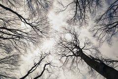 Zwart-witte bomen stock afbeeldingen