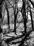 Zwart-witte bomen stock afbeelding