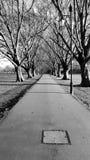 Zwart-witte bomen Royalty-vrije Stock Afbeelding