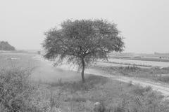 Zwart-witte boom royalty-vrije stock afbeeldingen