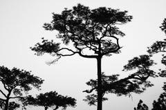 Zwart-witte boom Stock Afbeeldingen