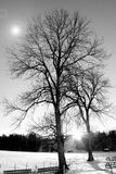 Zwart-witte boom Stock Foto