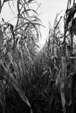 Zwart-witte de Rij van het graangebied stock foto's