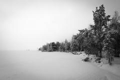 Zwart-witte de winterscène Stock Foto
