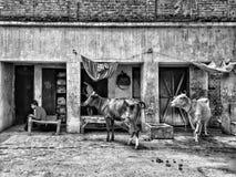 zwart-witte dieren stock afbeeldingen