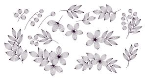 Zwart-witte elegante bladeren en bloemen met geplaatste aders bloemenelementen, vector royalty-vrije illustratie