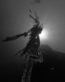 Zwart-witte engelenvissen Stock Fotografie