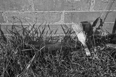 Zwart-witte foto met borstel dichtbij een bakstenen muur met gras stock foto
