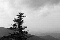 Zwart-witte foto van een boom op een berghelling die een vallei met onweerswolken overzien Stock Fotografie