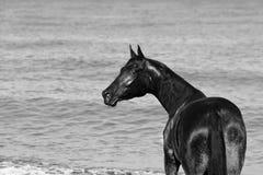 Zwart-witte foto van een paard royalty-vrije stock afbeeldingen