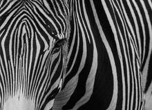Zwart-witte gestreepte strepen Royalty-vrije Stock Foto