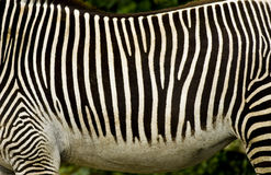 Zwart-witte gestreepte strepen stock foto