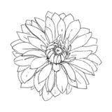 Zwart-witte grafische dahlia Stock Afbeelding