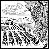 Zwart-witte het landschap van de wijngaard Stock Afbeeldingen
