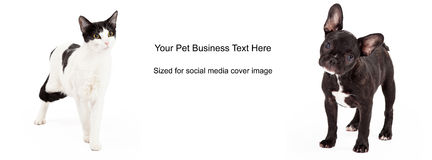 Zwart-witte Hond Cat Cover Photo Stock Afbeelding