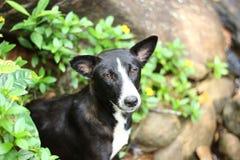 Zwart-witte hond in straat Royalty-vrije Stock Foto's