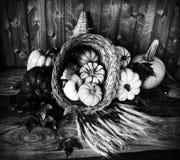 Zwart-witte hoorn des overvloeds - Stock Foto