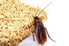 Zwart-witte kakkerlakken stock foto's