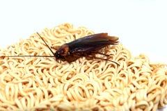 Zwart-witte kakkerlakken royalty-vrije stock foto's