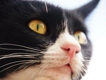 Zwart-witte kat, (17), close-up, van onderaan Stock Foto