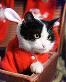 Zwart-witte kat in een kostuum van de Nieuwjaar` s maskerade van Santa Claus met oren in retro koffer De gelukkige jonge zakken v royalty-vrije stock foto's