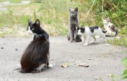 Zwart-witte kat en katjes Royalty-vrije Stock Foto