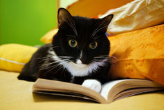 Zwart-witte kat en open boek Stock Afbeeldingen