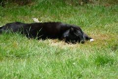 Zwart-witte kat in het gras Stock Foto