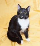 Zwart-witte kat met gele ogen Stock Foto