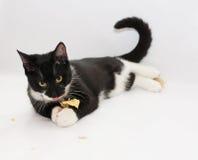 Zwart-witte kat met gele ogen Stock Fotografie
